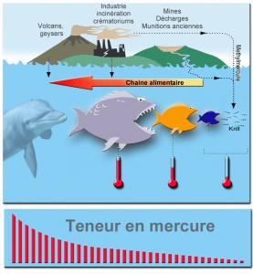 allaitement poisson mercure