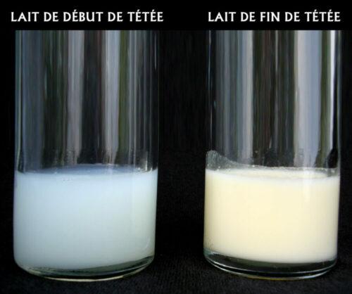 lait de début de tétée et lait de fin de tétée